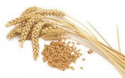 حلق کی ہڈی یا گندم کا دانہ