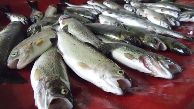 """خپلو میں """"آکسیجن کی کمی"""" سے 1000 سے زائد مچھلیاں ہلاک"""