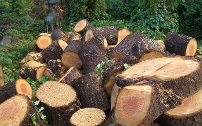 جنگلات کی غیر قانونی کٹائی، پی ٹی آئی چترال کے ضلعی صدر عبدا لطیف پر بھاری جرمانہ عائد