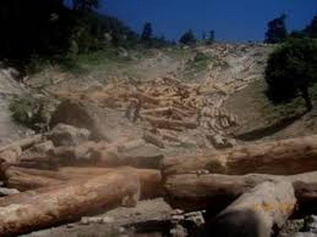 مکتوبِ چترال – محکمہ جنگلات کی تنظیم نو کی جائے