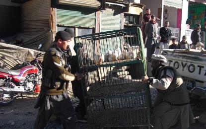 چترال ٹاؤن میں تجاوزات کے خلاف مہم شروع