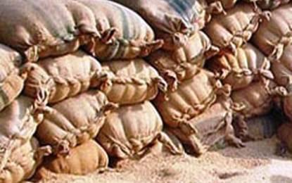 گوریکوٹ استور کا گودام پھر سے خالی ہوگیا، گندم ناپید
