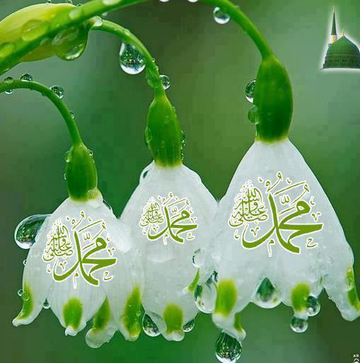 پیغمبر اسلام کی شان میں گستاخی برداشت نہیں کی جاسکتی، مولانا رحمت اللہ سراجی