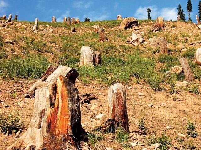 گزشتہ تین ماہ میں جنگلوں کی غیر قانونی کٹائی کے جرم میں ٦٠ افراد کے خلاف کاروائی کی گئی ہے، ڈویژنل فارسٹ آفیسر