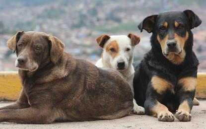 آوارہ کتوں نے نگر خاص میں علاقے کے مکینوں اور مال مویشیوں کی زندگی اجیرن کر کے رکھ دی ہے۔ ضلعی انتظامیہ خاموش تماشائی