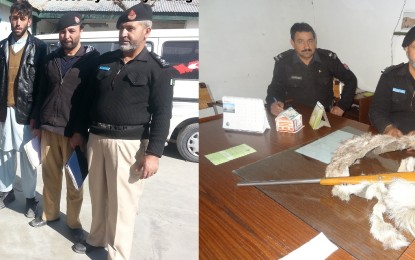 چترال، غیر قانونی شکار کرنے والے ملزمان گرفتار،  بندوق اور مارخور کی کھال برآمد