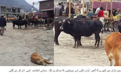 چلاس، مرکزی بازار میں واقع پرانا اڈہ میں کچرے کے ڈھیر لگ گئے، آوارہ کتوں، گدھوں اور مویشیوں نے ڈیرے ڈال دئیے