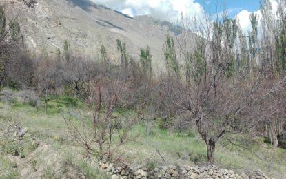 ضلع ہنزہ کے مرکزی علاقوں پر کیڑوں کا یلغار، پھلدار و غیر پھلدار درخت متاثر