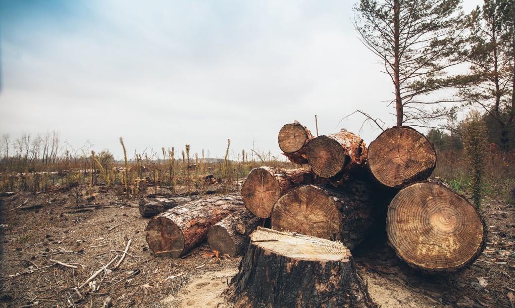 تحصیل اشکومن کے علاقے اسمبر میں جنگلات کی بے دریغ کٹائی کا انکشاف