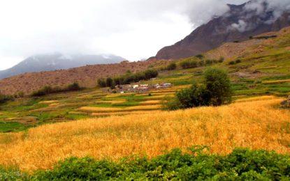 گانچھے میں بارہ دنوں سے موسم خراب، کسانوں کو پریشانی کا سامنا