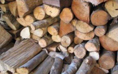 ٹھیکیدار اور ہیڈماسٹر نے داہیمل مڈل سکول کے بچے سوختنی لکڑی سپلائی کرنے میں لگا دئیے