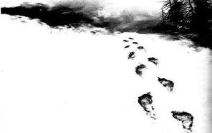نلتر: برفانی چیتا کو بچاتے ہوئے برف پہ چلنے سے7افراد کے پاؤں جل گئے