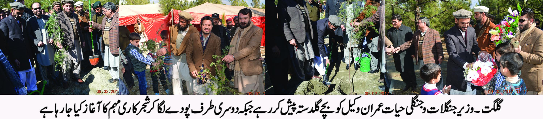 گلگت بلتستان میں شجر کاری مہم کا آ غاز کر دیا گیا