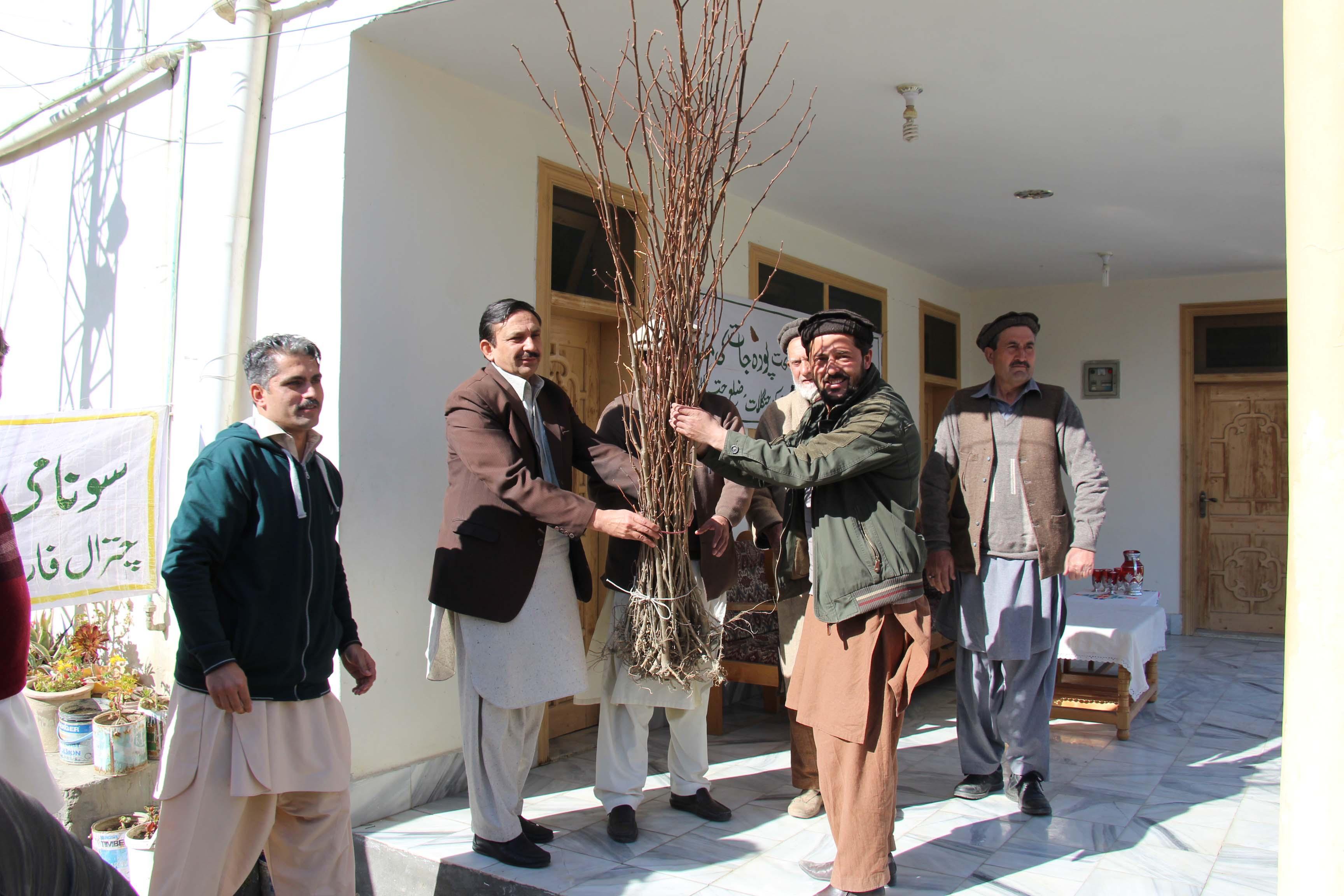 چترال میں شجر کاری مہم کا آغاز