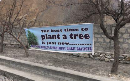 مورخون گوجال سے شجرکاری مہم کا آغاز ہوگیا، امسال ہنزہ اور نگر میں 25،000 درخت لگائے جائیں گے