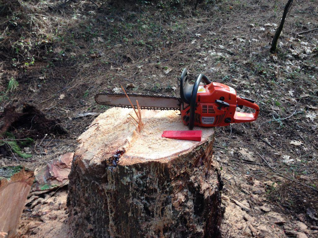 چلاس: جوتی جنگلات کی بے دریغ کٹائی کا فوری نوٹس، تحقیقات کے لئے کمیٹی قائم