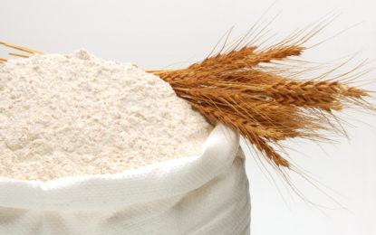 دیامر میں گندم کا جدید سائنسی بنیادوں پر کاشت کا آغاز کر دیا ہے۔ ڈاکٹر شاکراللہ، ڈپٹی ڈائریکٹر ایگریکلچر ریسرچ