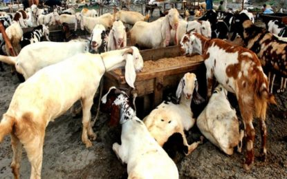 دنین چترال میں مستقل سرکاری مویشی منڈی کا قیام
