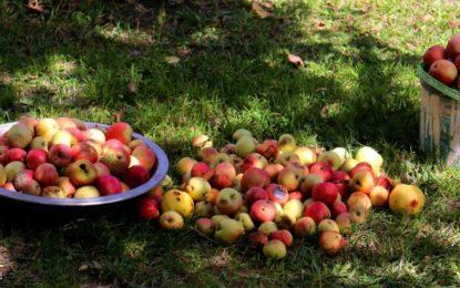 غذر: سیب کی پیداوار بڑھانے کے موضوع پر دو روزہ تربیتی ورکشاپ کا اختتام