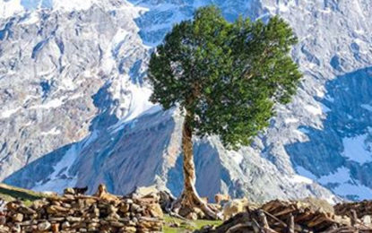 کٹوال حراموش کے تنہا درخت کی کہانی