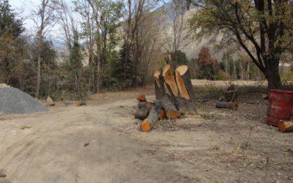 چترال، واپڈا مین ٹرانسمشن لائن کیلئے 3600 درخت کاٹے جارہے ہیں