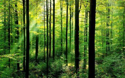 امسال گلگت بلتستان میں 30 لاکھ پودے لگانے کا منصوبہ، محکمہ تعلیم کو ہر طالبعلم کے نام پر ایک درخت لگانے کی ہدایت
