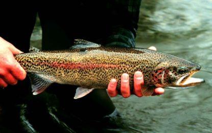 تحصیل پھنڈر کے نالہ کھوکش اور چمارکھنڈ میں مچھلیوں کے شکار پر پابندی عائد، دفعہ 144کا نفاذ