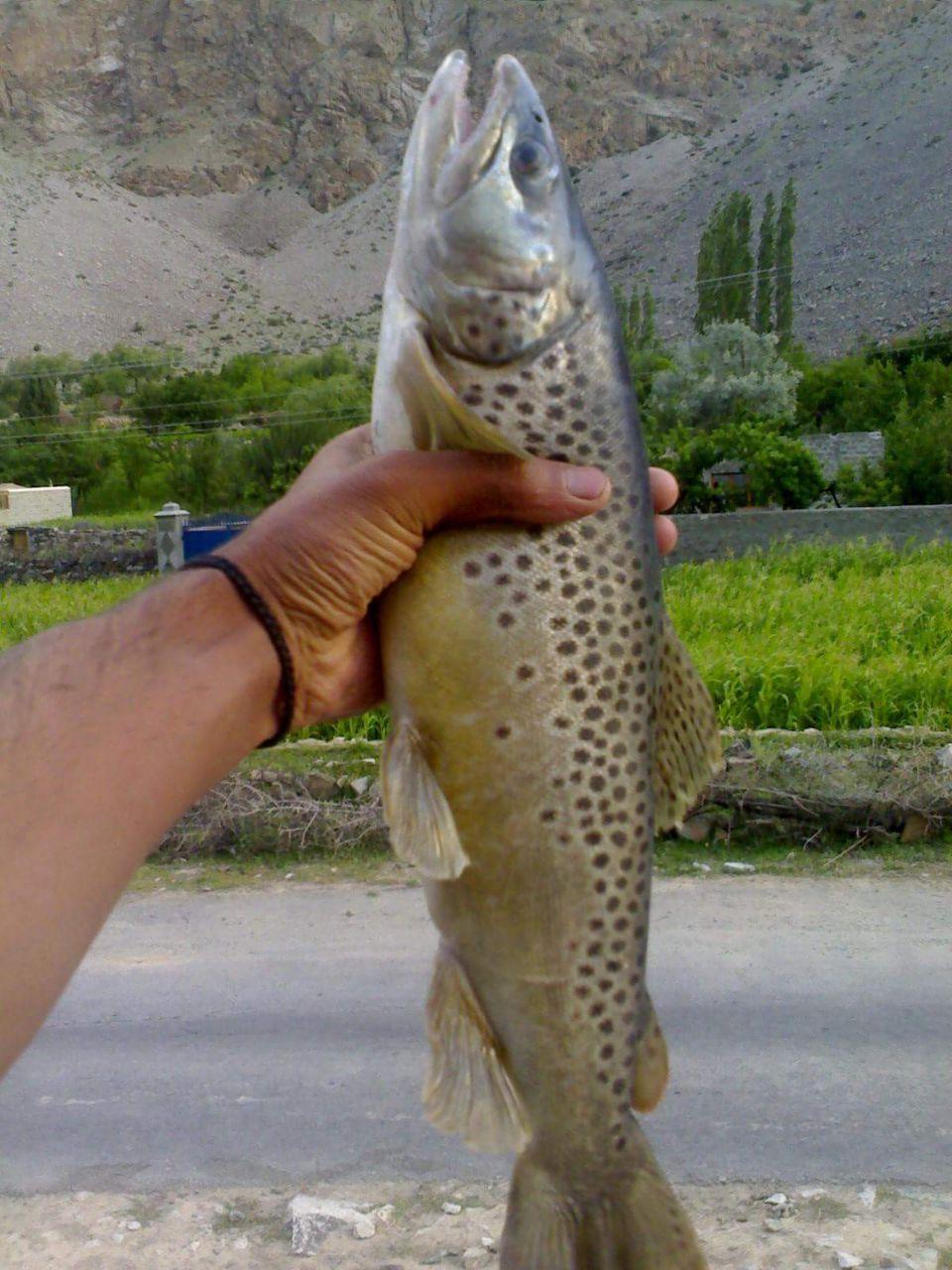 غذر کے بالائی علاقوںمیںٹراوٹ مچھلی کا غیر قانونی شکار جاری