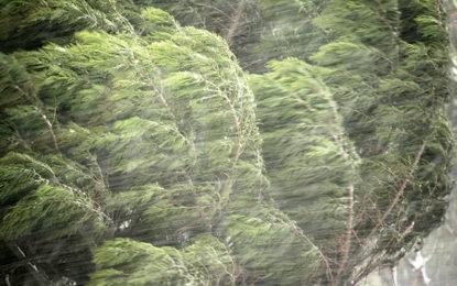 اشکومن: طوفانی آندھیوںکے باعث گرنے والی درخت کی زد میں آکر ایک شخص جان بحق
