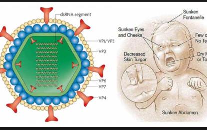 ہنزہ: روٹا وائرس سے بچاوکے لئے بچوںکی ویکسینیشن کا آغاز