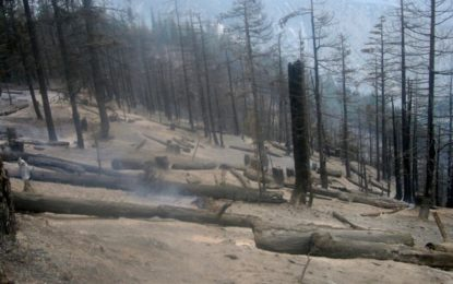 وادی کالاش کے سنجریت جنگل میںآگ لگا دی گئی، سینکڑوں درخت خاکستر