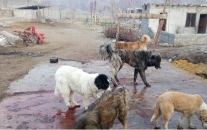 چلاس: سلاٹر ہاوس نہ ہونے کی وجہ سے لوگوں کو گندہ گوشت کھلانے کا انکشاف